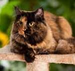 Kratzbäume für Katzen
