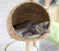 gebrauchte katzenkratzb ume kaufen ja oder nein kratzbaum kaufen info. Black Bedroom Furniture Sets. Home Design Ideas