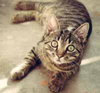 Katzenklo