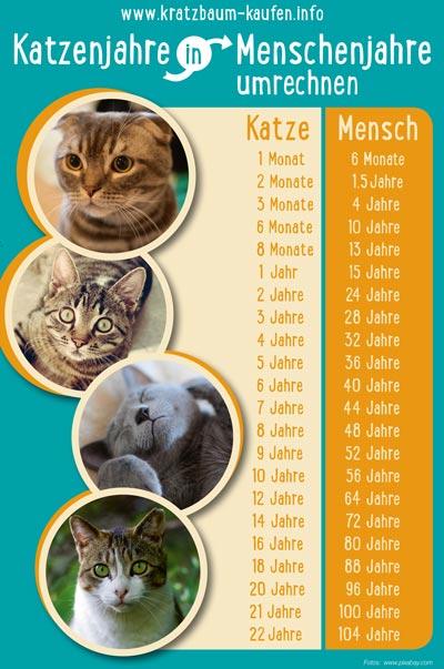 Katzenjahre
