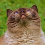 Katzenerziehung