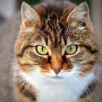 Übergewicht Katze