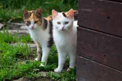 Katzenzusammenführung