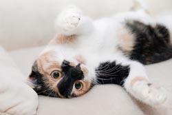 selbstreinigende Katzentoilette