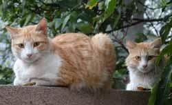 Zusammenführung von Katzen