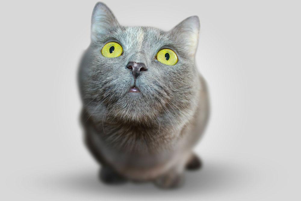 Katze App