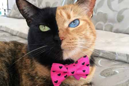 venus the two face cat die katze mit zwei gesichternkratzbaum kaufen info. Black Bedroom Furniture Sets. Home Design Ideas