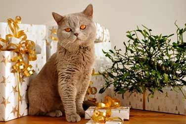 wenn die katze geburtstag feiert 6 ultimative geschenke f r die geburtstagskatzekratzbaum. Black Bedroom Furniture Sets. Home Design Ideas