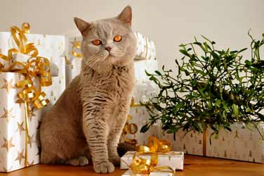 Katze Geburtstag