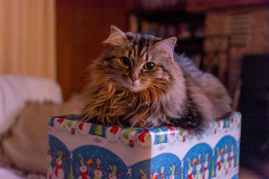 Wenn Die Katze Geburtstag Feiert 6 Ultimative Geschenke Fur Die