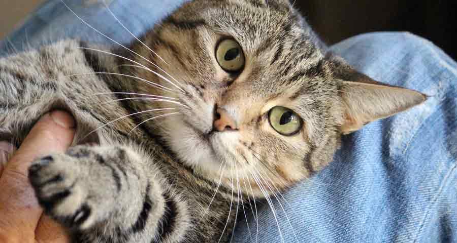 Katzenmassage