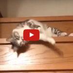 faule Katze Video