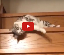 faule Katze Video