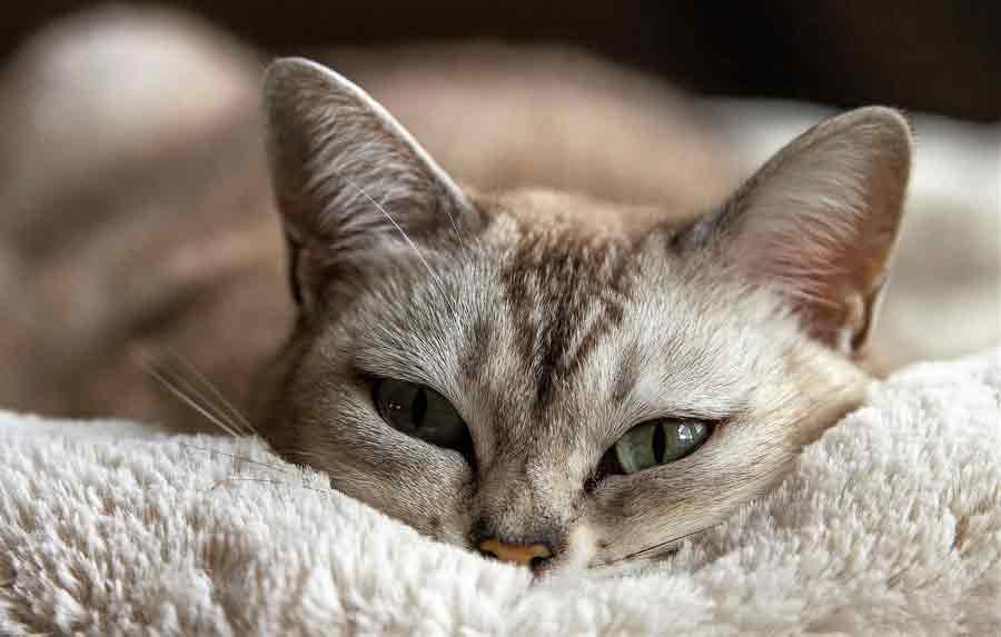 Katze schaut Horrorfilm