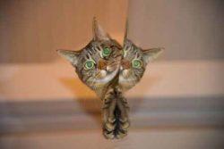 Spielzeug für Katzen selber basteln