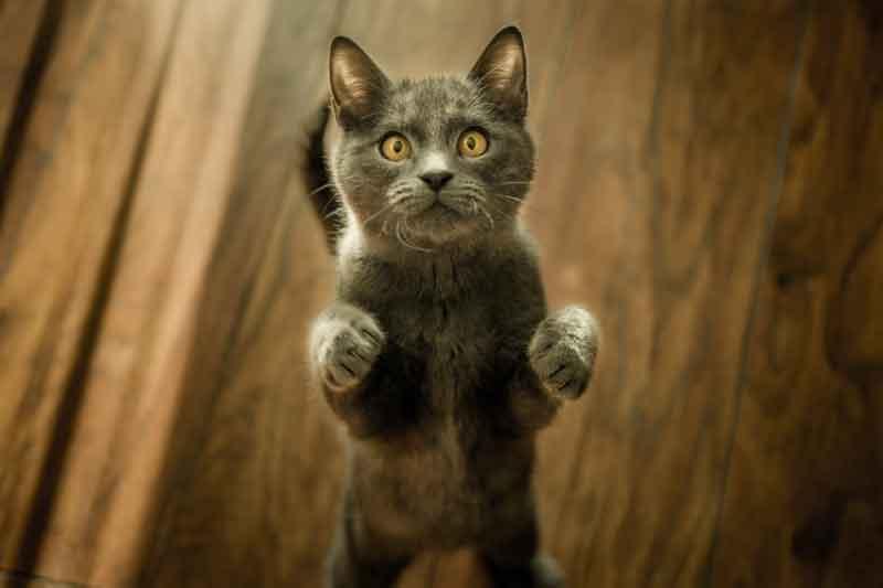 Katzen Baldrian