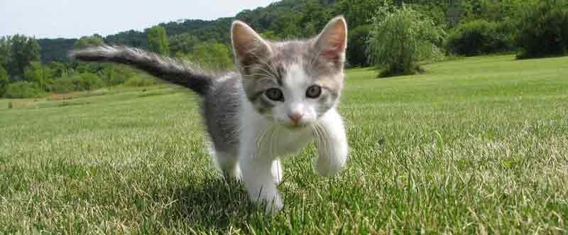 Katze hat Durchfall