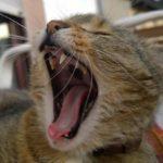 Katze Mundgeruch
