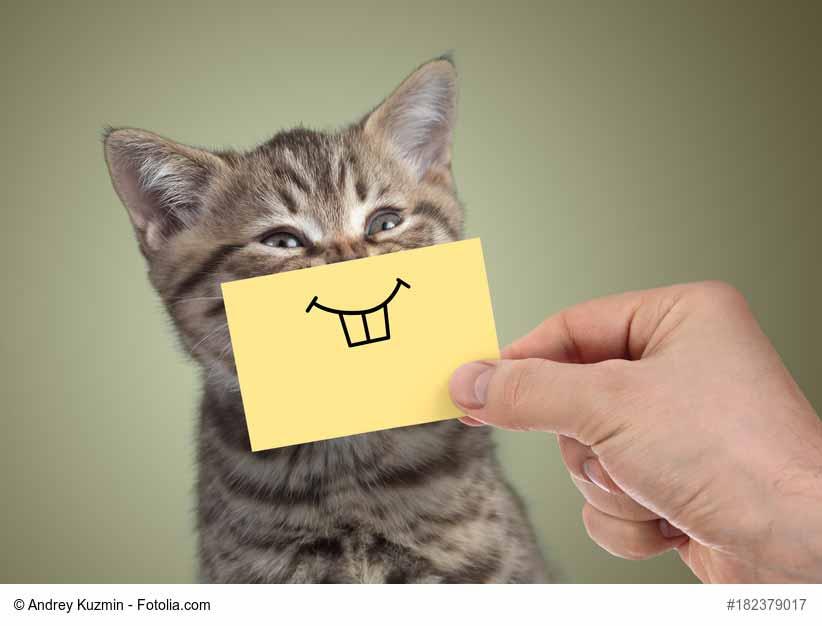 Katze gurrt